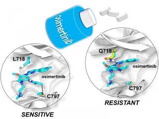 Osimertinib drug resistance computer simulations